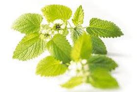 رشته مهندسی کشاورزی,رشته گیاه پزشکی,مهندسی کشاورزی گرایش گیاه پزشکی