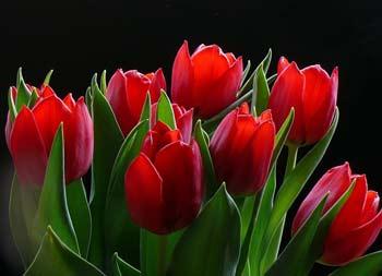 محلولهای نگهدارنده گل, محلول محافظ, محلول های محافظ گل