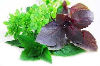سبزی, کاشت سبزی در گلدان, کاشت سبزی در خانه