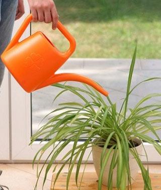 آبیاری گیاهان آپارتمانی, آبیاری گلهای آپارتمانی, روشهای آب دادن به گلها