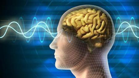 مغز جانوران, اندازه مغز جانوران, بزرگترین مغز در بین جانداران