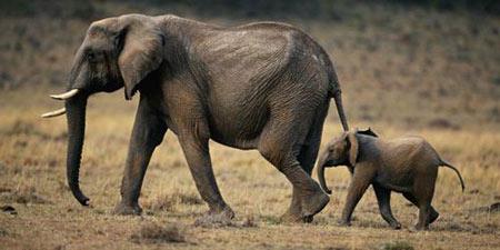 رابطه اندازه مغز و هوش, اندازه مغز جانوران, بزرگترین مغز در بین جانداران