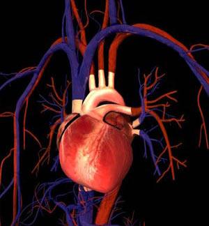 دستگاه گردش خون,چگونگی کار کردن دستگاه گردش خون,انواع رگ های بدن