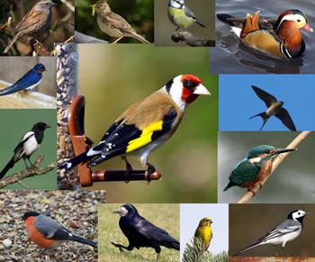 همه چیز درباره پرندگان, تغذیه پرندگان, علت مهاجرت پرندگان