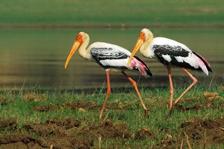 همه چیز درباره پرندگان,علت مهاجرت پرندگان,تغذیه پرندگان