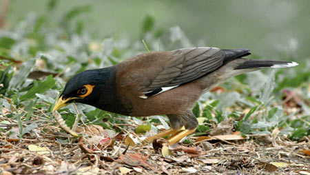 طبقه بندی پرندگان, تغذیه پرندگان, علت مهاجرت پرندگان