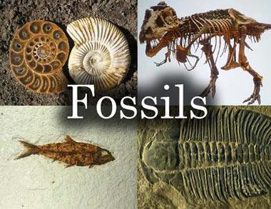 سنگواره,چگونگی تشکیل فسیل,انواع فسیل