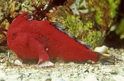 ماهی,انواع ماهی,گونه های جدید ماهی,مطالب علمی
