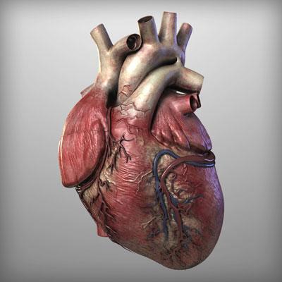 ساختار قلب,قلب,آناتومی قلب