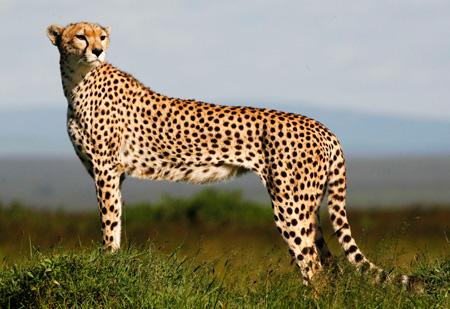 سریعترین جانوران روی زمین, سریعترین موجود زنده جهان