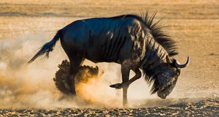 کل یالدار,سریعترین جانوران روی زمین, سریعترین موجود زنده جهان