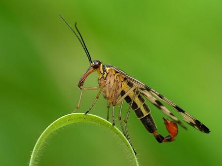 حشرات,مزایای حشرات,گردافشانی توسط حشرات