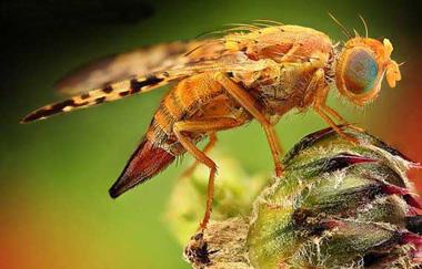 حشرات, مزایای حشرات, فواید حشرات برای انسان, گردافشانی توسط حشرات
