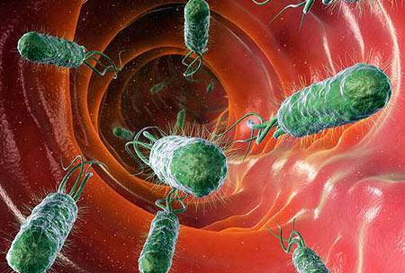 باکتری, انواع باکتری هان,میکروبیوم