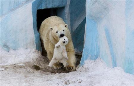 افسانه قطب شمال (مستند)