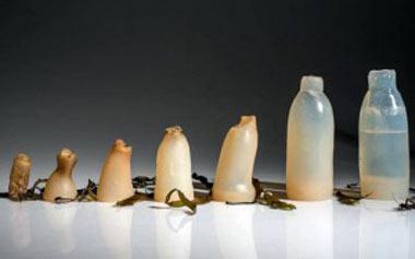 چگونگي استفاده از جلبك براي ساخت بطري, ساخت بطري آب خوردني, بطري