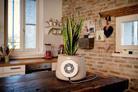 گلدان Clairy,ویژگی های گلدان Clairy,راههای کاهش سموم خانه