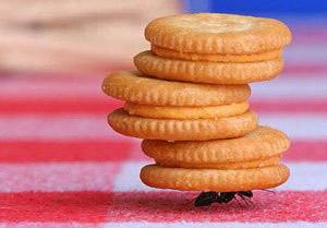 مورچه,زندگی مورچه ها,انواع مورچه