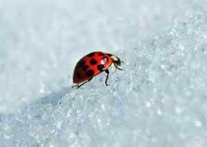 چرا حشرات یخ نمی زنند,خواب زمستانی حشرات
