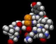 کشف مولکول اخلاق,اکسیتوسین,هورمون تستوسترون