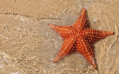 ستاره دریایی,عکس ستاره دریایی,انواع ستاره دریایی,تغه ستاره های دریایی
