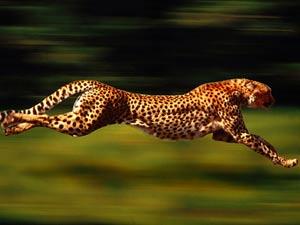 آشنایی با سریعترین حیوانات جهان,مطالب علمی,دانستنیهای علمی