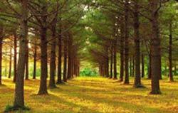 مطالب داغ: دانشمندان صدای نفس نفس زدن درختان برای آب را شنيدند