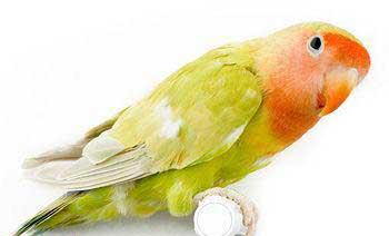 بیماری پرندگان,علائم بیماری پرندگان,نشانه های بیماری پرندگان