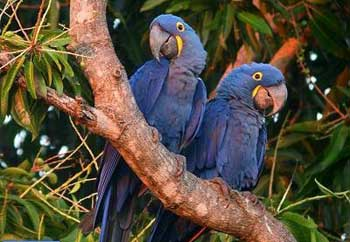 علائم بیماری پرندگان