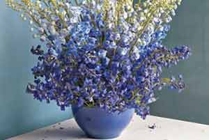 گل,گلهای آپارتمانی