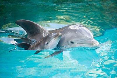 دلفین,عکس دلفین,زندگی دلفین ها