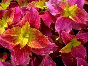 گلهای آپارتمانی,نگهداری از گلهای آپارتمانی,خاک ژلهای