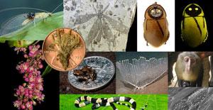 مطالب داغ: عجیبترین گونههای 2012 در آلبوم دانشمندان