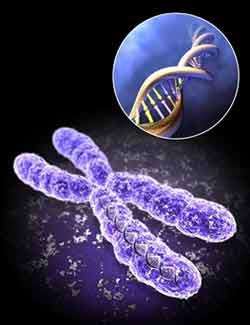 کروموزوم جنسی,سن باروری,کروموزوم جنسی مردان