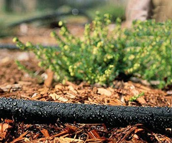 پرورش گل در خانه,کاشت گیاه در خانه,اصول باغبانی