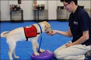 مطالب داغ: سگ هایی که سرطان را بو می کشند