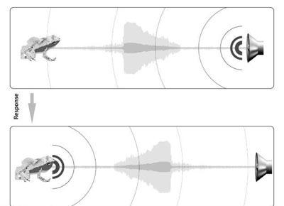 مطالب داغ: قورباغهای که با دهان میشنود!