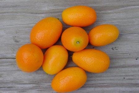 عجیبترین میوههای جهان,میوهای شگفت انگیز,تصاویر میوه های عجیب