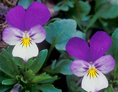 انواع گلهای پاییزی,روشهای نگهداری از گلها