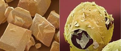 تصاوير خارقالعاده دانشمندان از دنياي درون دانهها و بافتها