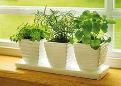 گیاهان,گیاهان آپارتمانی,طریقه نگهداری از گیاهان آپارتمانی