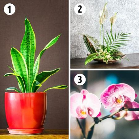 آشنایی با انواع گیاهان خانگی, نکاتی برای استفاده از گل های آپارتمان