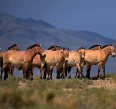 درباره اسب های وحشی,اسب های وحشی جهان