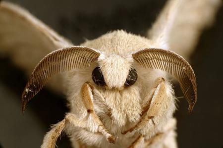 انواع حشرات عجیب, تصاویری از حشرات عجیب دنیا
