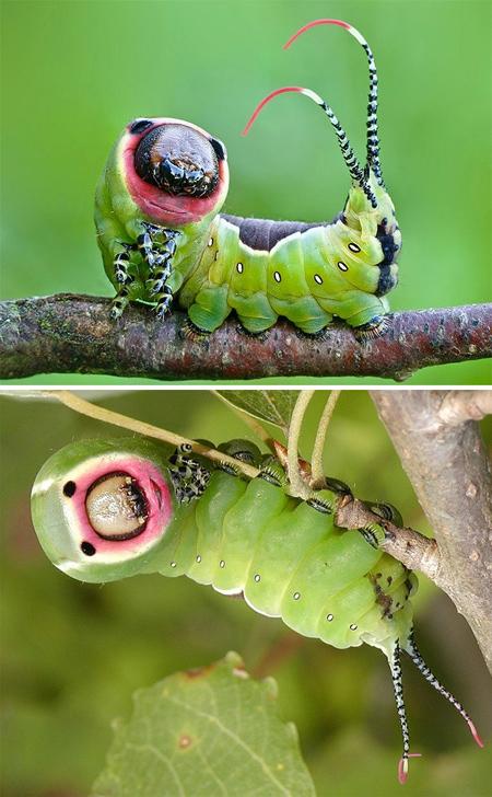 تصاویری از حشرات عجیب دنیا,تصاویری از سوسک های طلایی