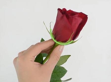 نگهداری از گل رز,نگهداری شاخه های گل رز