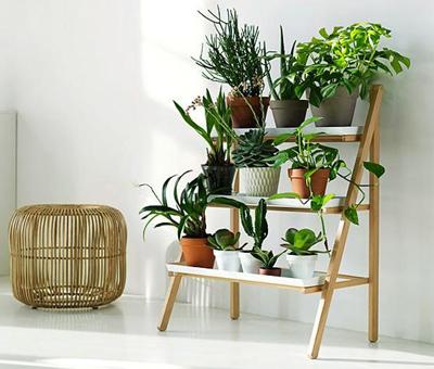 شرایط نگهداری از گیاهان آپارتمانی,گل های آپارتمانی