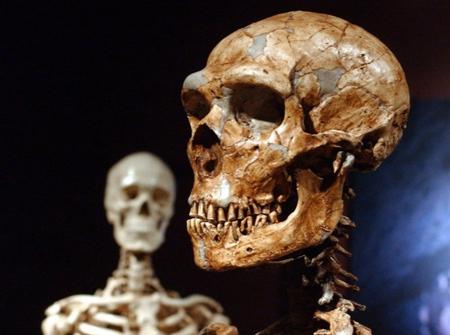 اندازۀ انسان اولیه,دلیل ناپدید شدن نئاندرتال