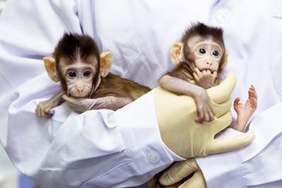 انجام شبیه سازی میمون,دودمان سازی انسانی