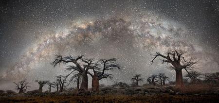 تصاویر کمیاب ترین و کهنسال ترین درختان دنیا